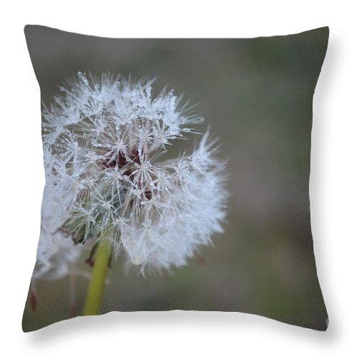 Dandelion Frost Throw Pillow featuring the photograph Dandelion Frost by Maria Urso