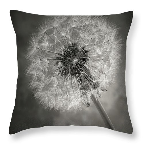 Dandelion Throw Pillow featuring the photograph Dandelion In Black And White by Garry Gay