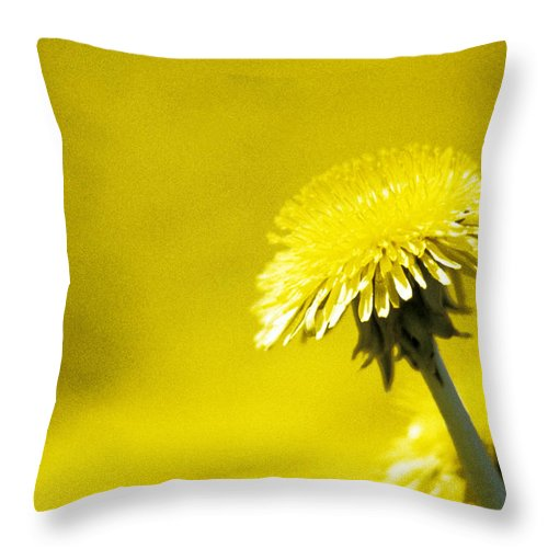 Dandelion Throw Pillow featuring the photograph Dandelion In Yellow by Steve Somerville