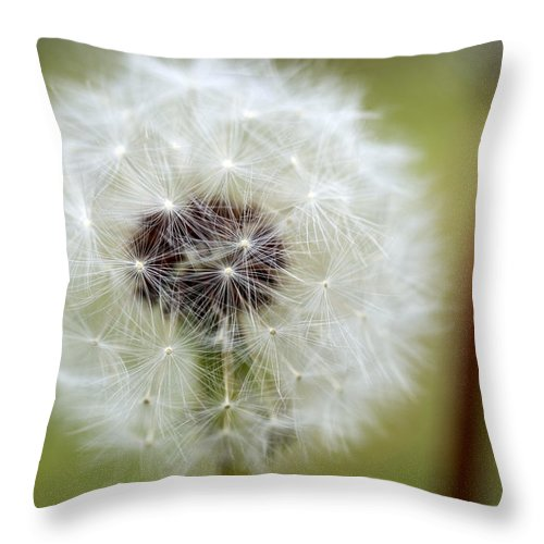 Dandelion Throw Pillow featuring the photograph Dandelion by Jessica Wakefield