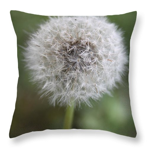 Dandelion Throw Pillow featuring the photograph Dandelion by Lauri Novak