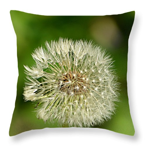 Dandelion Puff Throw Pillow featuring the photograph Dandelion Puff by Ally White