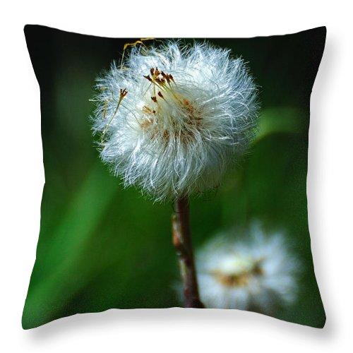 Dandelion Throw Pillow featuring the photograph Dandelion Puff by Edward Sobuta