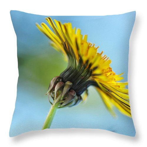 Photography Throw Pillow featuring the photograph Dandelion Reaching High by Kaye Menner