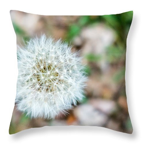 Connected Throw Pillow featuring the photograph Dandelion Seed Head by SR Green