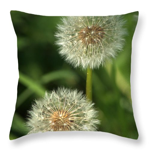 Dandelion Throw Pillow featuring the photograph Dandelion Seed Heads by Chris Day