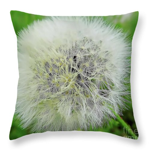 Dandelion Throw Pillow featuring the photograph Dandelion Wishes by D Hackett