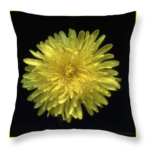 Flower Throw Pillow featuring the photograph Dandy Dandelion by Kat Saarloos
