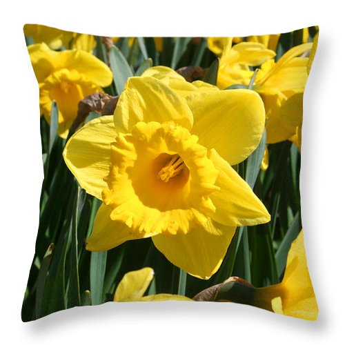 Daffodils Throw Pillow featuring the photograph Darling Spring Daffodils by Mary Gaines
