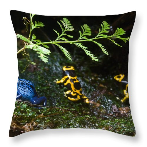 Frog Throw Pillow featuring the photograph Dart Frogs On The Move by Douglas Barnett