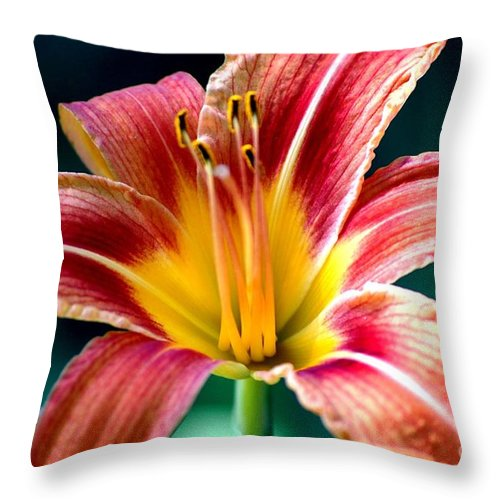 Landscape Throw Pillow featuring the photograph Day Lilly by David Lane