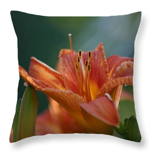 Day Lily Throw Pillow featuring the photograph Day Lily by Robert E Alter Reflections of Infinity