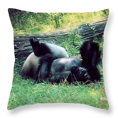 Animals Throw Pillow featuring the photograph Daydream Believer by Jan Amiss Photography