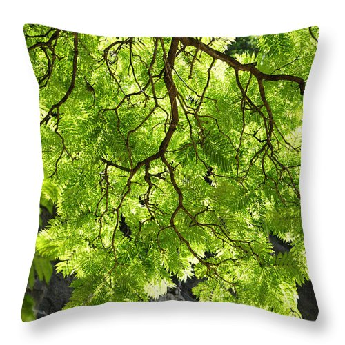 Skiphunt Throw Pillow featuring the photograph Daydream by Skip Hunt