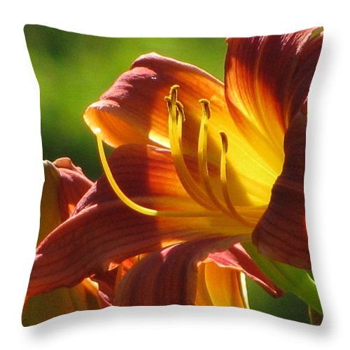 Summer Throw Pillow featuring the photograph Dayliliy by Alfred Ng