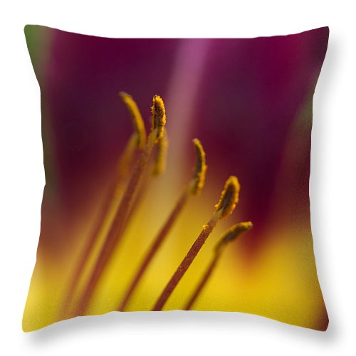 Daylily Throw Pillow featuring the photograph Daylily Abstract by Kathy Clark