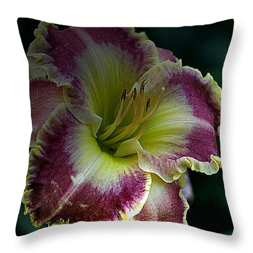 Daylilies Throw Pillow featuring the photograph Daylily Collection # 13 by G Berry