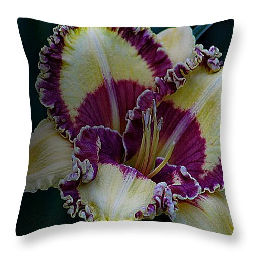 Daylilies Throw Pillow featuring the photograph Daylily Collection #9 by G Berry
