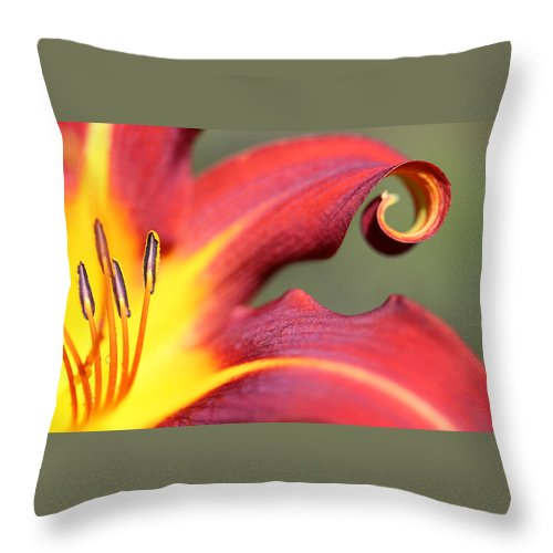 Daylily Curl Throw Pillow featuring the photograph Daylily Curl by Tammy Pool