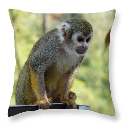 Animal Throw Pillow featuring the photograph Deceptive Paradise by Valerie Ornstein