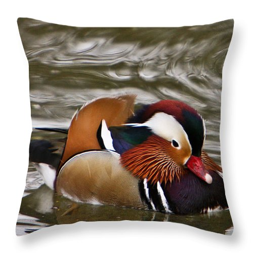 Duck Throw Pillow featuring the photograph Decorated Duck by Douglas Barnett