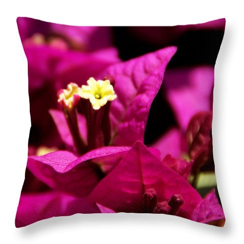 Bougainvillea Throw Pillow featuring the photograph Deep Desire by Linda Shafer