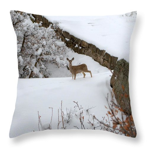Deer Throw Pillow featuring the photograph Deer At Castlewood Canyon by Anjanette Douglas