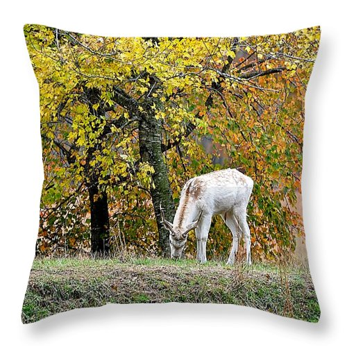 Animals Throw Pillow featuring the photograph Deer Boy by Jan Amiss Photography