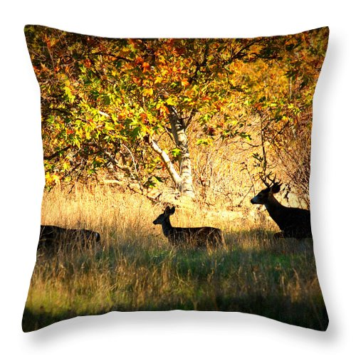 Landscape Throw Pillow featuring the photograph Deer Family In Sycamore Park by Carol Groenen