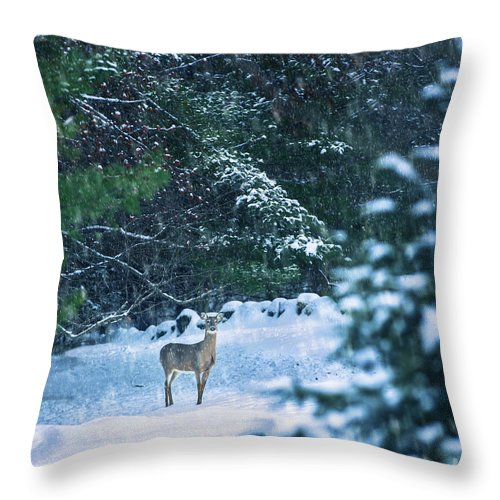 Deer Throw Pillow featuring the photograph Deer In A Snowy Glade by Diane Diederich