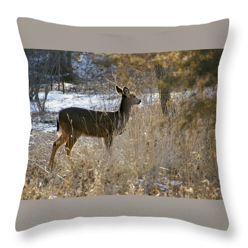 Deer Throw Pillow featuring the photograph Deer in Morning light by Toni Berry