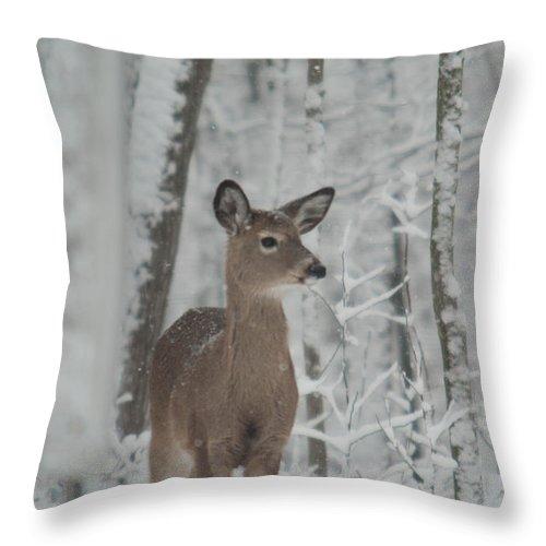 Deer Throw Pillow featuring the photograph Deer In The Snow by Douglas Barnett