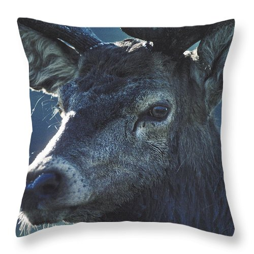 Wildlife Throw Pillow featuring the photograph Deer by Steve Somerville