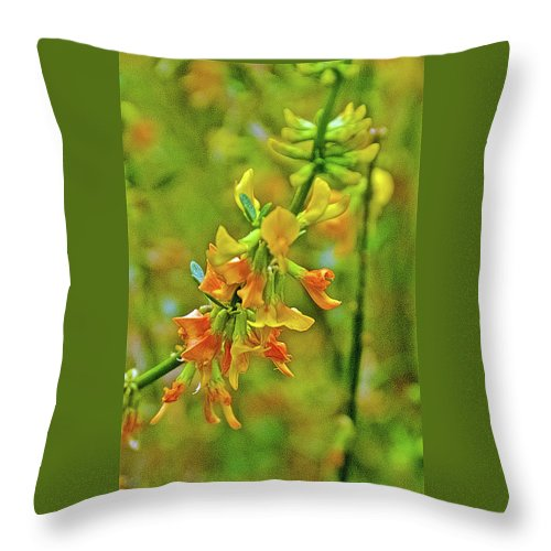 Deerweed Closeup In Rancho Santa Ana Botanic Gardens Throw Pillow featuring the photograph Deerweed Closeup In Rancho Santa Ana Botanic Gardens, Claremont-california by Ruth Hager