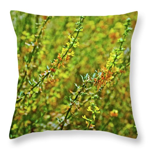 Deerweed In Rancho Santa Ana Botanic Gardens In Claremont Throw Pillow featuring the photograph Deerweed In Rancho Santa Ana Botanic Gardens, Claremont-california by Ruth Hager