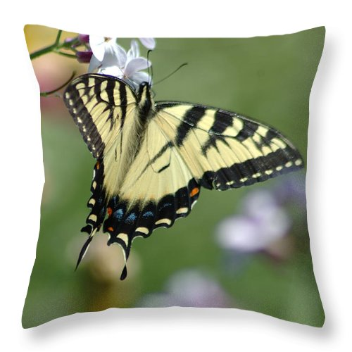 Butterfly Throw Pillow featuring the photograph Delicate Balance by Linda Murphy