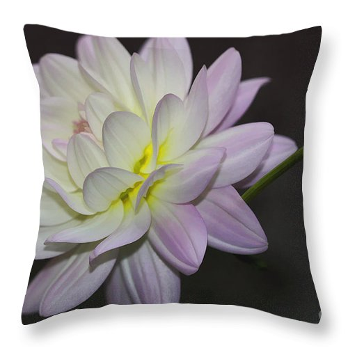 Flower Throw Pillow featuring the photograph Delicate Dahlia Balance by Deborah Benoit