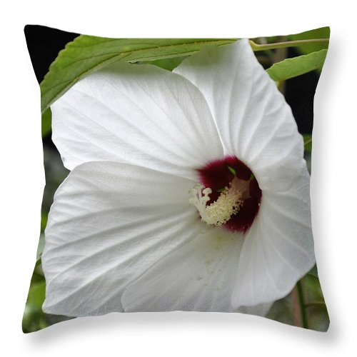 Floral Throw Pillow featuring the photograph Delicate White by Sally Falkenhagen
