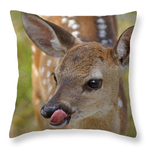 Deer Throw Pillow featuring the photograph Delicious Deer by Heather Coen