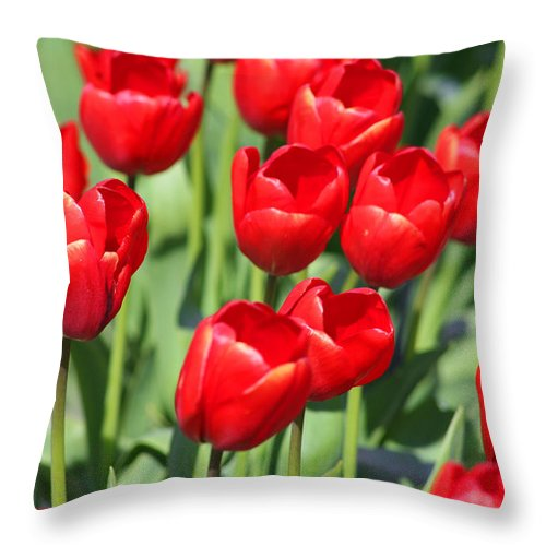 Red Tulips Throw Pillow featuring the photograph Delicious Tulips by Mary Gaines