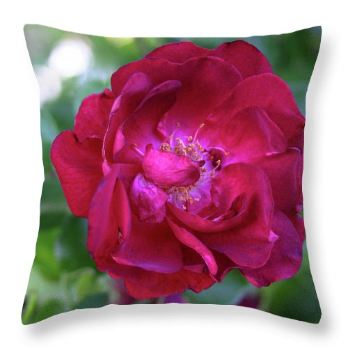 Rose Throw Pillow featuring the photograph Delta Dawn by Nina Fosdick