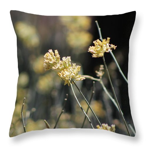 Sunnyland Throw Pillow featuring the photograph Desert Milkweed by Colleen Cornelius