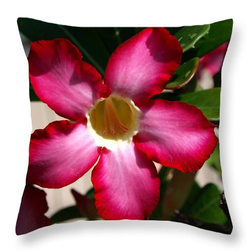 Desert Rose; Desert; Rose; Red; Pink; Flower; Bush; Garden; Florida; Plant; Adenium; Obesum; Africa; Throw Pillow featuring the photograph Desert Rose by Allan Hughes