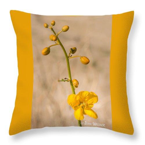 California Throw Pillow featuring the photograph Desert Senna In Spring by Joan Wallner