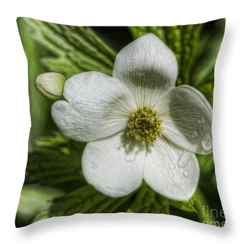 Flower Throw Pillow featuring the photograph Details by Chris Fleming