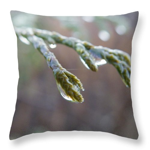 Nature Throw Pillow featuring the photograph Dew Glaze by Peggy King
