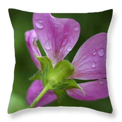 Flower Throw Pillow featuring the photograph Dew Kisses by Deborah Benoit