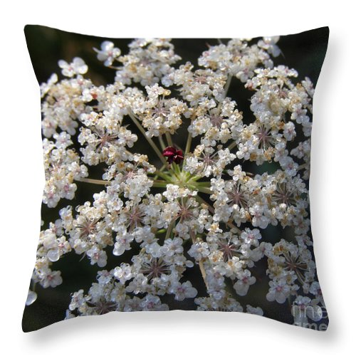 Wildflowers Throw Pillow featuring the photograph Dew On Queen Annes Lace by Lynn Quinn