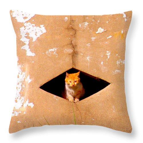 Cat Throw Pillow featuring the photograph Diamond Kitty by Albert Stewart
