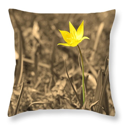 Flower Throw Pillow featuring the photograph Dignity by Cathy Beharriell